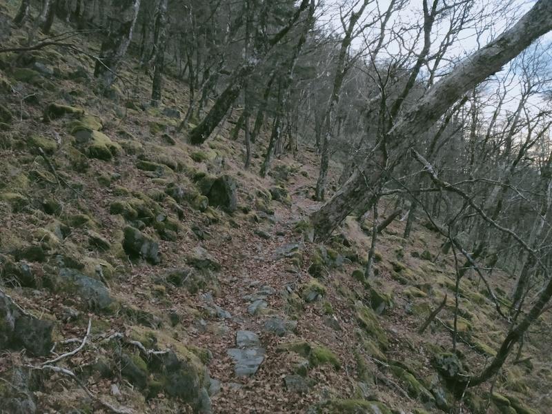 将監小屋から登山道分岐へ登る