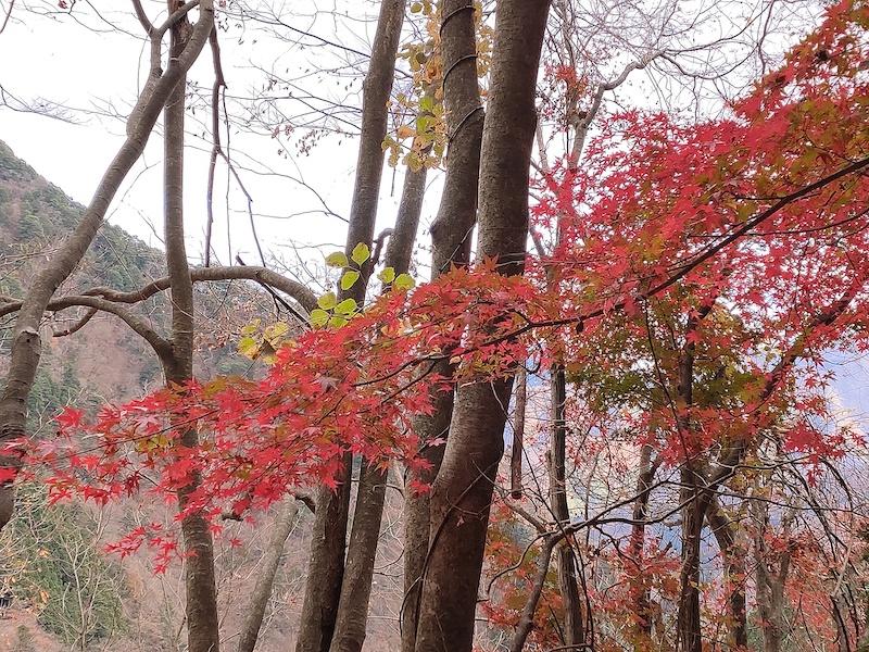 麓に近いとまだ紅葉