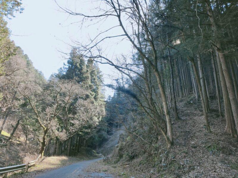 廃道 成木街道