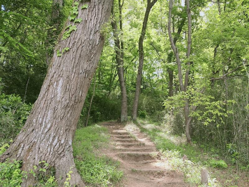 平山緑地から歩く