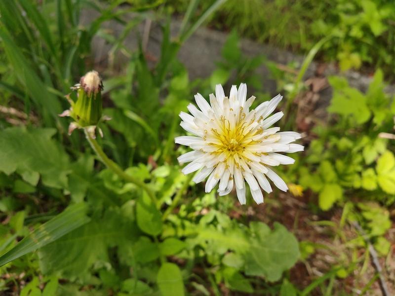 平山緑地の花