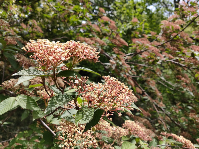 平山城祉公園内の花