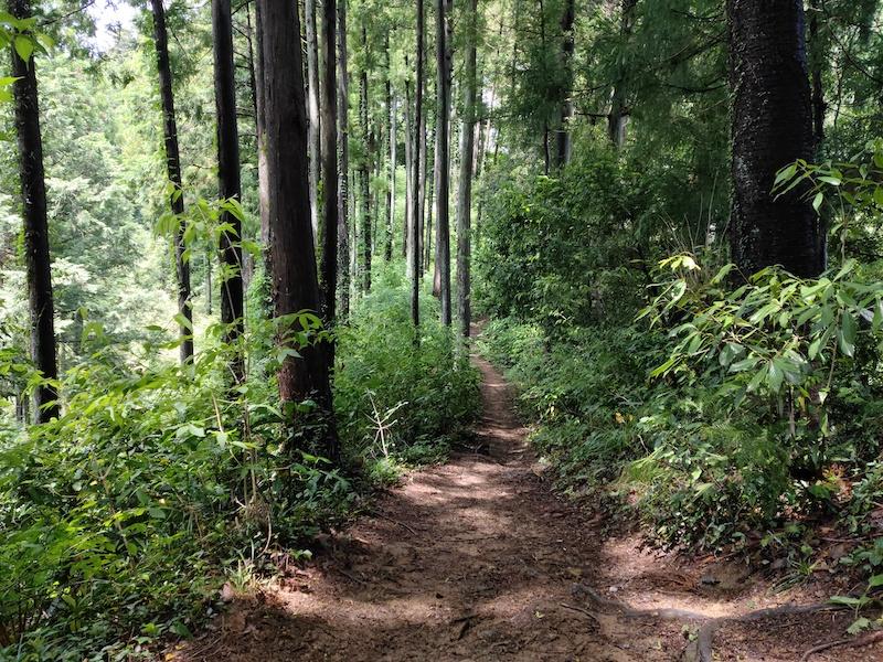 歩きやすい長淵ハイキングコース